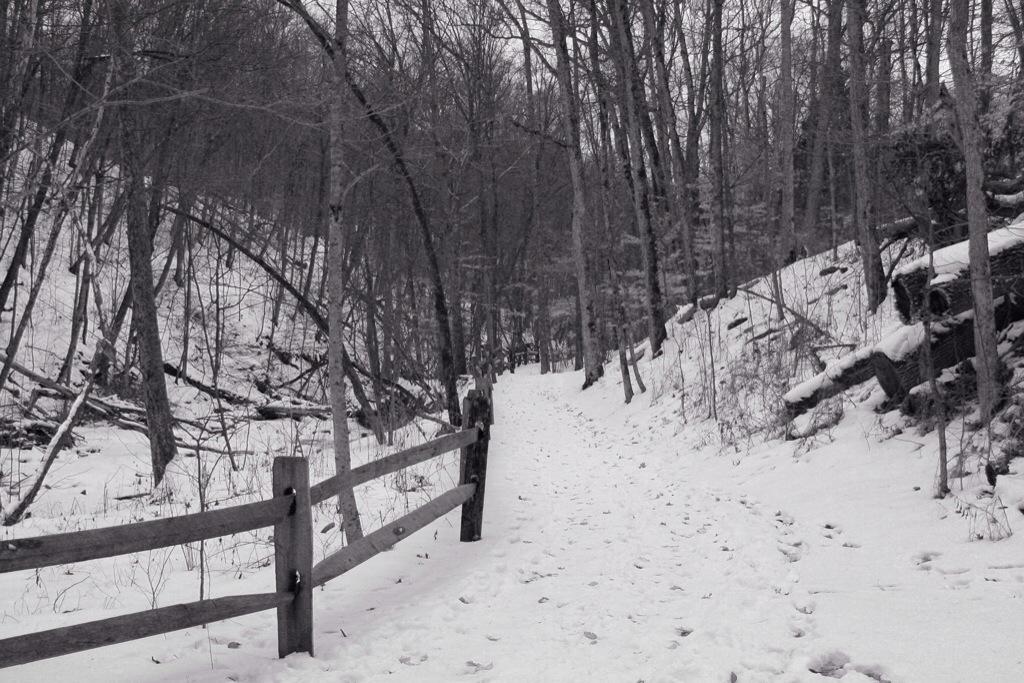 Psalm Photos – 17 – SnowyPath