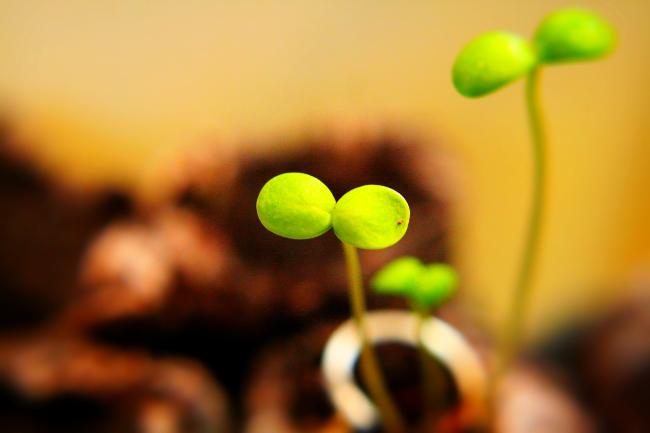Psalm Photos – 80 – Seedlings