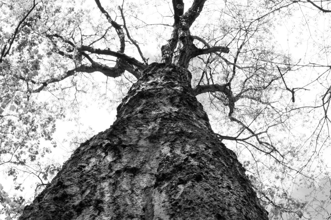 storytree