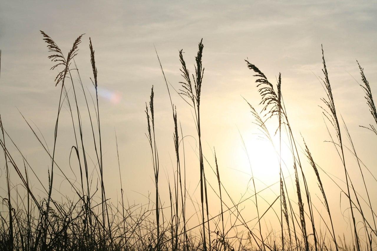 Mark Photos – 2:23-28 –Grain