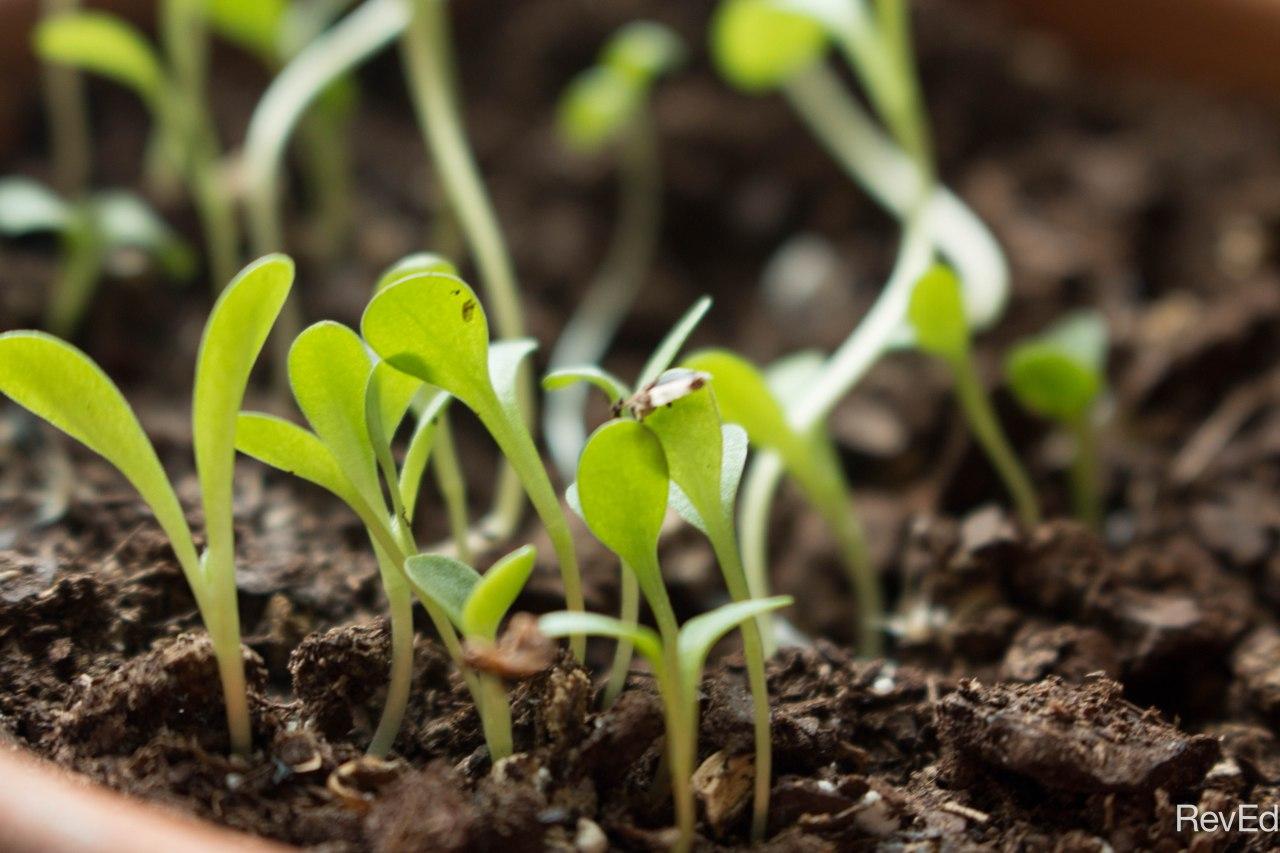 Mark Photos – 4:26-29 –Growing