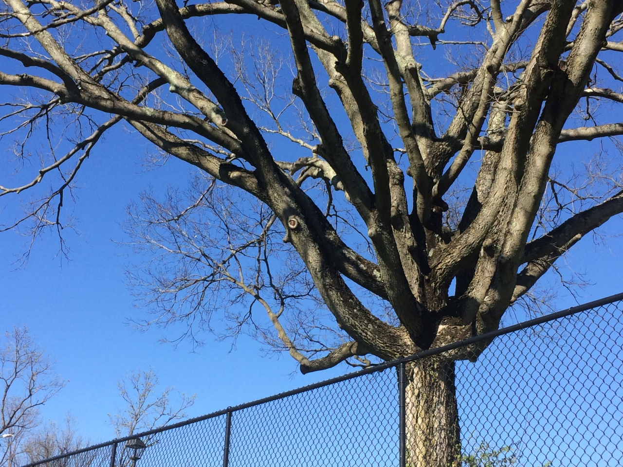Gratitude 14 –Branches