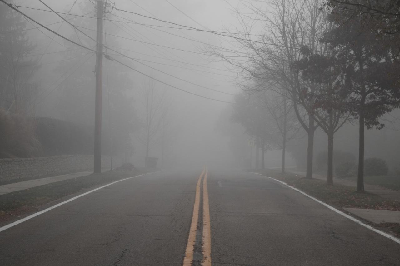 Gratitude 11 –Fog