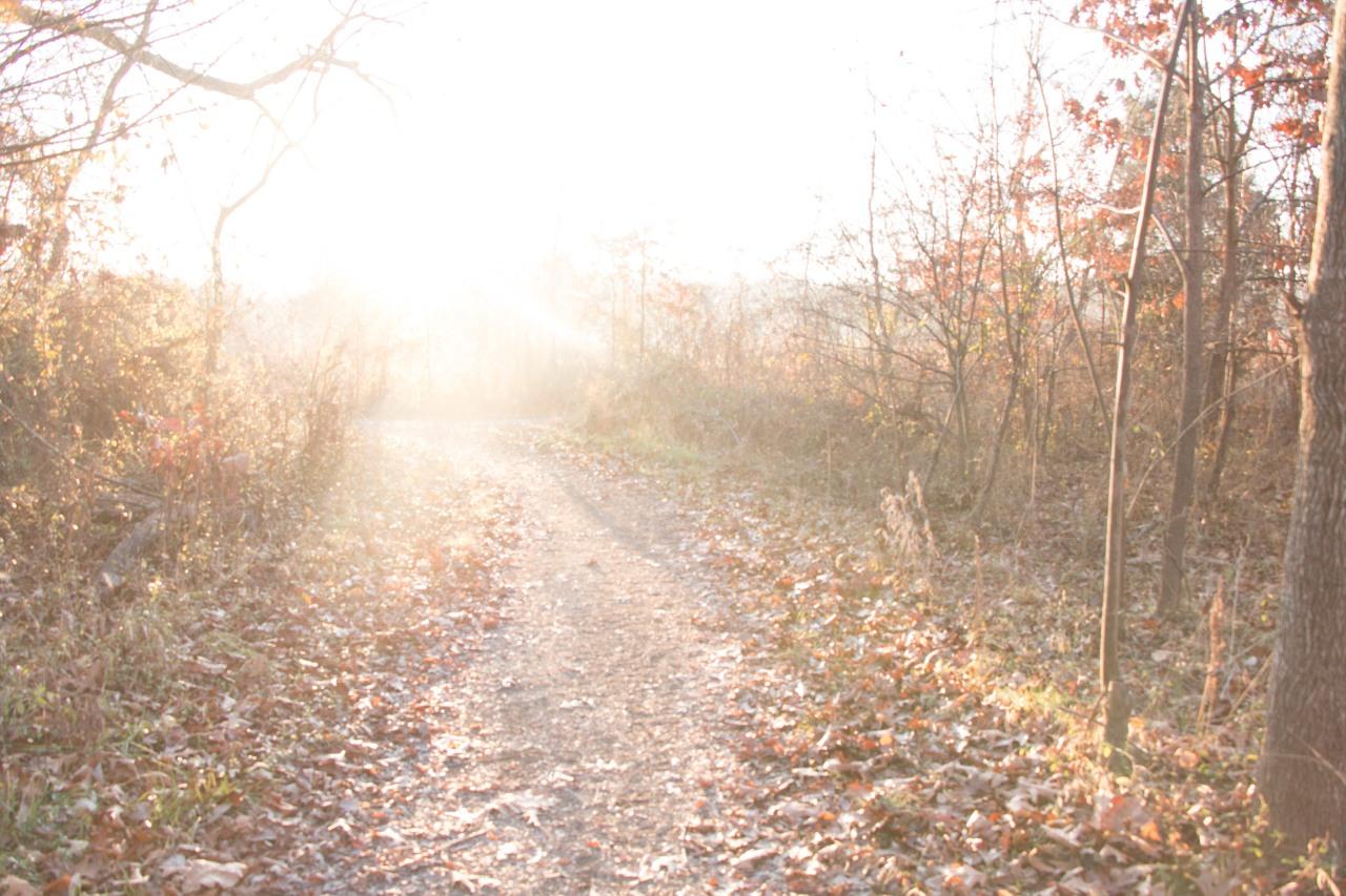 Gratitude 26 –Blinding