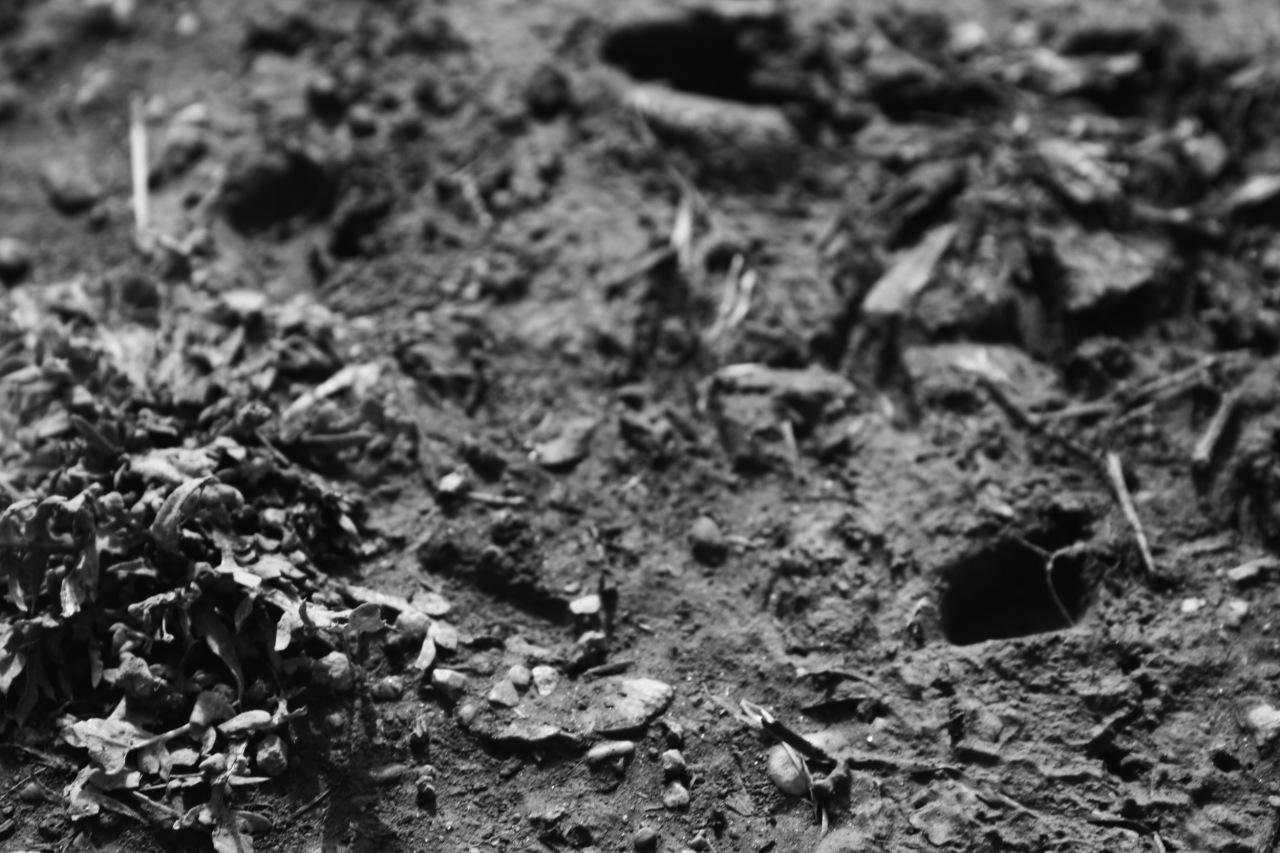 Imago Scriptura 40 –Dirt