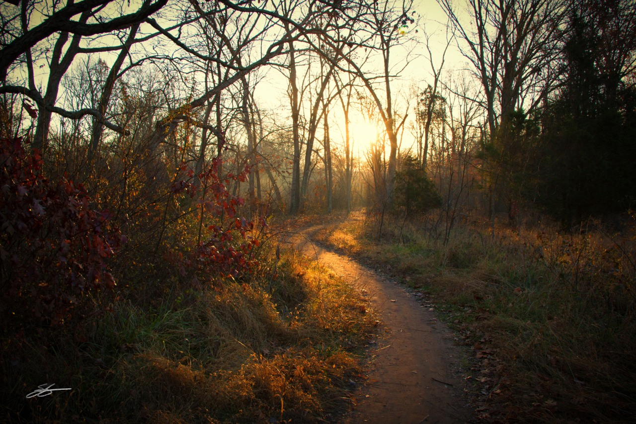 Imago Scriptura 86 – Psalm 89 – Walking in Light