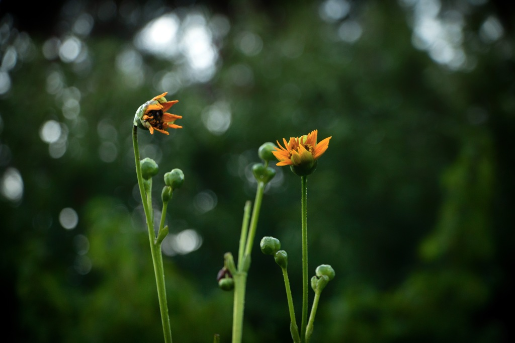 Two flowers talking with each other